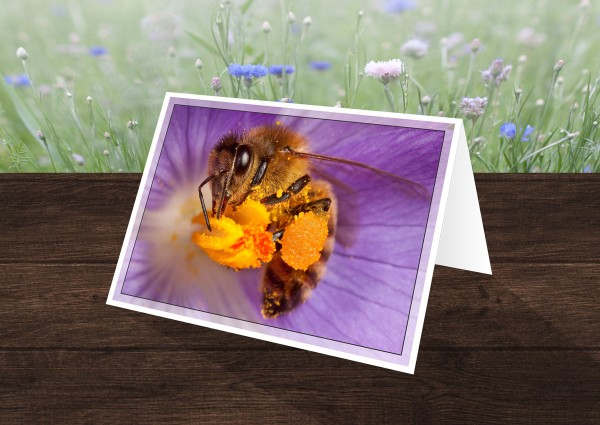 Pollinator Greeting Cards